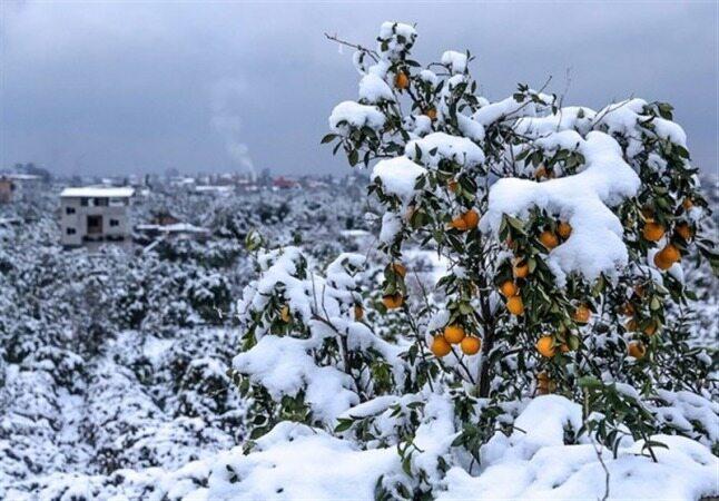 هواشناسی ایران ۹۸/۱۱/۲۲|تداوم بارش برف و کاهش ناگهانی دما در کشور
